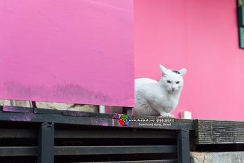 고양이 삼청동 #001