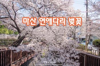 마산 연애다리 벚꽃, 햇살 좋은 봄날 같이 걸어볼까?