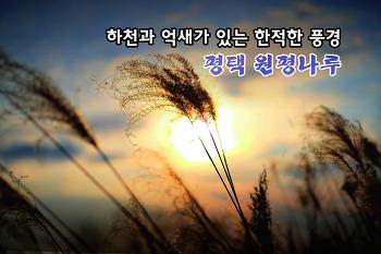 평택 겨울철 억새밭 ~ 원평나루!!