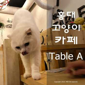 홍대 고양이카페 테이블에이