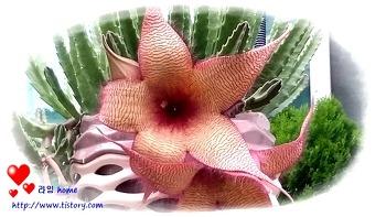 대화서각 꽃~