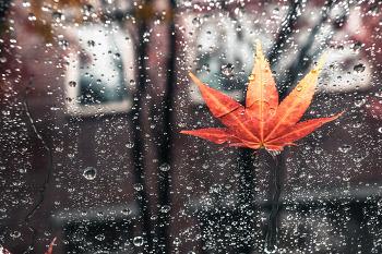 [SOME포토] 감성과 함깨 내리는 가을비