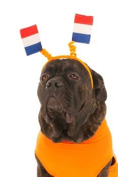 [윤리적소비 사례]네덜란드에는 동물을 위한 정당이 있다