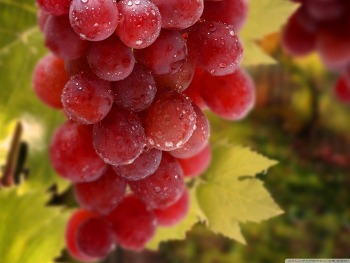 Download Bunch Of Grapes HD Wallpaper