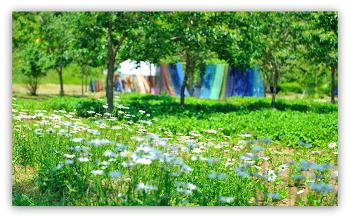 염색축제장의꽃 5ㅡ26