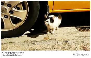 [적묘의 고양이]주차장 고양이,도시생태계, 캣맘 맘이 그래