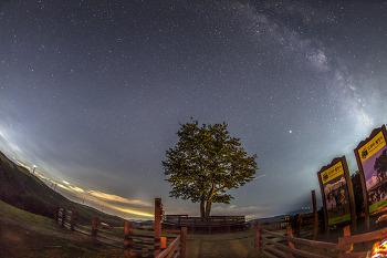 삼양목장 연애소설나무 은하수