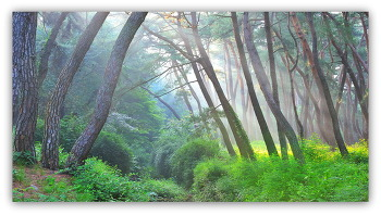 삼릉소나무빛내림 6ㅡ7