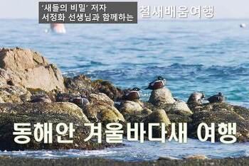 동해안 겨울 바다새 여행(1.5~6)