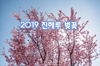 진해 진해루에서 만난 2019년 첫 벚꽃