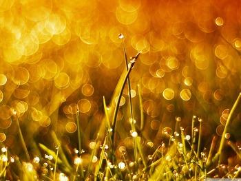 컴퓨터 바탕화면 Grass and Sun HD Wallpaper 무료 배경 이미지