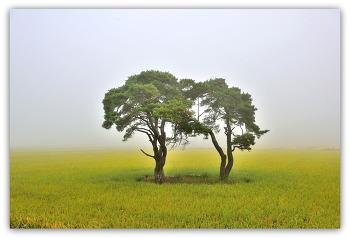 소나무 부부송 9ㅡ23 문경