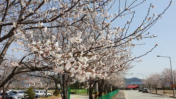 봄은 보옴이다. 봄 맞으러 가자