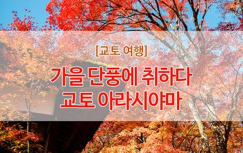 [교토여행]가을단풍에 취하는 아라시야마 여행