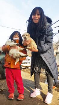 #박연우, 외가에서 .. 4마리의 귀여운 강아지와 함께