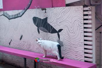 고양이 삼청동 #002
