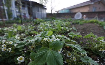 [전원생활] 봄향기 가득한 시골집 정원 # 별채공사 - 우레탄작업 20190501