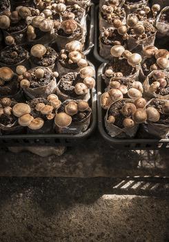 표고버섯, 마라톤을 떠올리다. by 포토테라피스트 백승휴