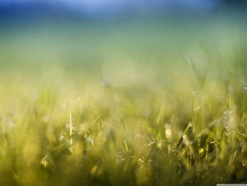 Grass Meadow HD Wallpaper