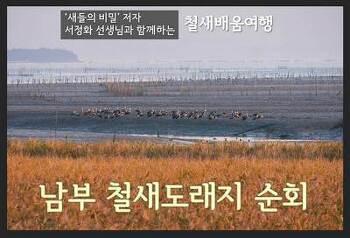 남부 철새도래지 순회 (2019년2월)