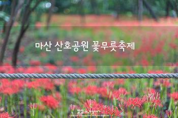 마산 산호공원 꽃무릇, 가을 붉은빛 그 매력 속으로 빠져든다
