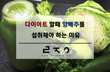 다이어트 할 때 양배추를 섭취해야 하는 이유