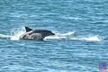 제주도에서 만난 남방큰돌고래