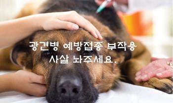 광견병 예방접종 주사 부작용 증상