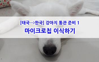 태국에서 한국으로 강아지 통관 준비하기_#1 마이크로칩 이식