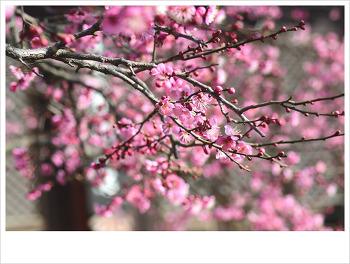 통도사의 봄...♥♡♥