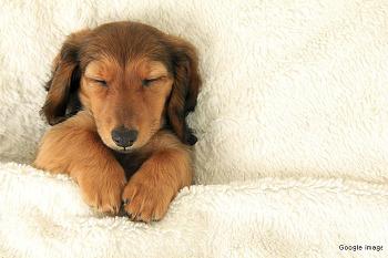 <간단한 영어표현> '잠이 더 필요해' 영어로