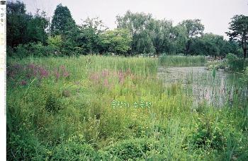 그여름의 물향기 수목원