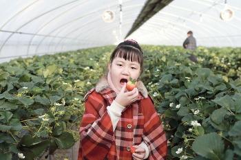 [시은공주]  딸기농장에서