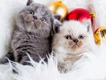 예쁜 배경화면 Kittens Balls HD Wallpaper 무료 배경 이미지