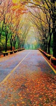 수목원의 가을
