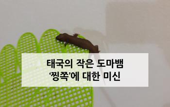 태국의 작은 도마뱀 찡쪽