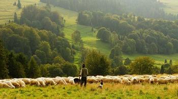 양치기 소년 - 헬조선 ver.