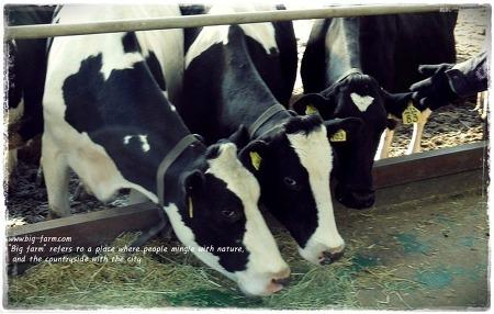 유기농 우유