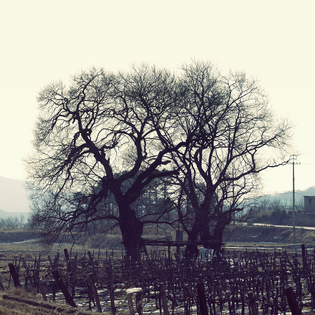 [Photo 02 05] 시골에서..