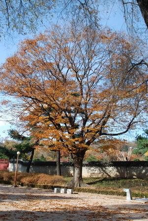 11월 14일 인왕산, 경복궁