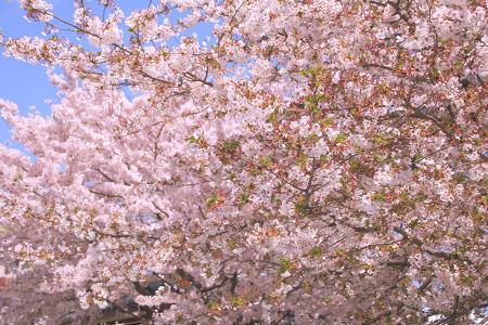 거제도 유채꽃과 벚꽃으로 감성충전했던 봄날을 추억하며