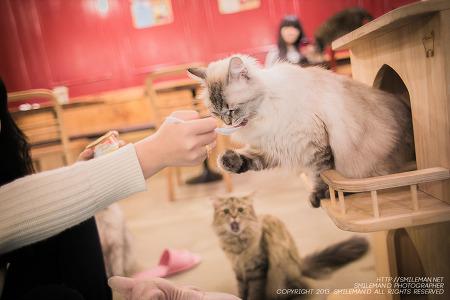 131103 구월동 로데오 토쿄키친 & 도도한고양이