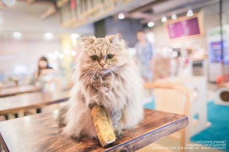 130804 구월동 도도한고양이