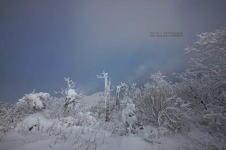 주목의 겨울(2014/12/06)
