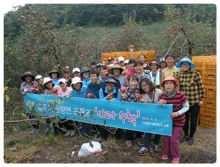 충주 하나님의교회(안상홍증인회) 사과같이 예쁜 얼굴~ 사과수확 봉사활동