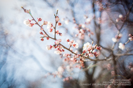 130414 아직 이른 봄.. @ 구월동 중앙공원