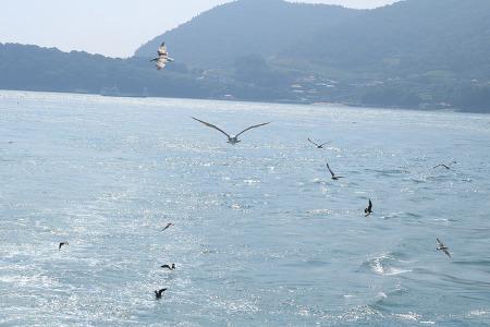 금오도를 떠나는 배 위에서 만난 갈매기떼