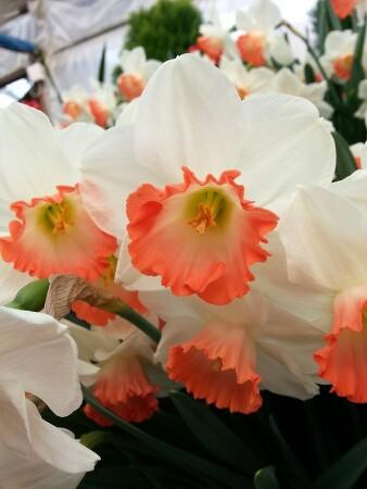 아산 나들이_세계꽃식물원