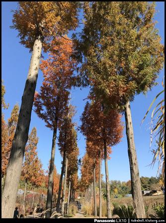 181104_항동의 멋진 수목원, [푸른수목원]의 가을
