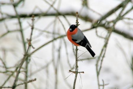 새 이름이 멋쟁이, 친구들이 사진 보더니 놀라